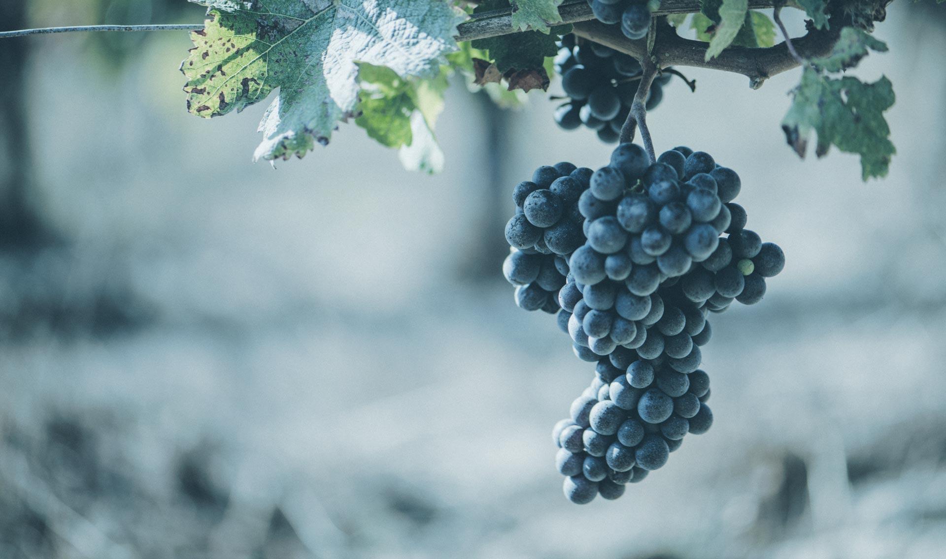 comptable-viticole